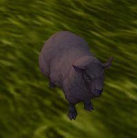 Image of Black Lamb