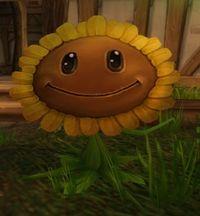 Image of Sunflower
