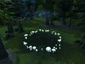 Western Tirisfal Glades Fairy ring.jpg