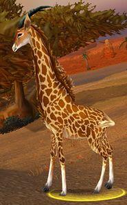 Image of Barrens Giraffe