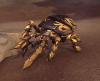 Image of Shackled Beetle