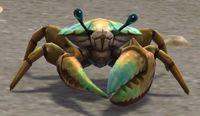 Image of Brineshell Crab