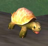 Image of Softshell Turtle