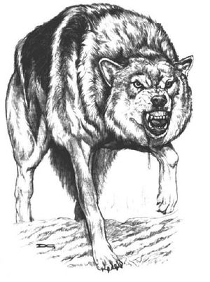 Timberwolf.JPG