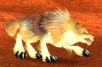 Imagen de Coyote del risco mayor