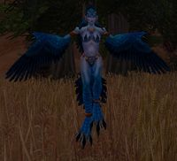 Image of Harpy Youngling