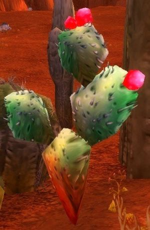 Cactus Apple.jpg