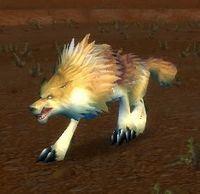 Image of Feral Crag Coyote