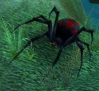 Black Widow Hatchling Wowpedia Your Wiki Guide To The