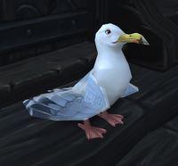 Image of Seabreeze Gull
