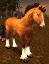 Image of Havenshire Stallion