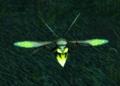 Darkmoon Glowfly.png