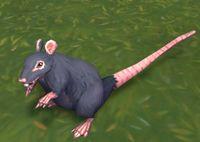 Image of Bilge Rat