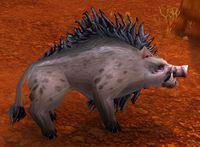 Image of Wild Mature Swine