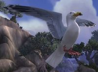 Image of Albatross Chick