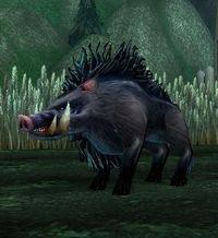 Image of Darktusk Boar