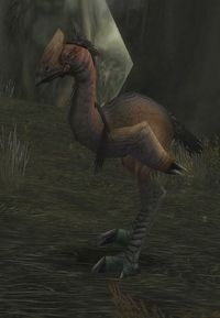 Image of Foreststrider