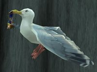 Image of Highwind Albatross