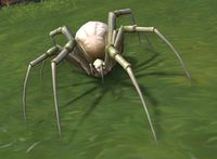 Image of Cellar Crawler