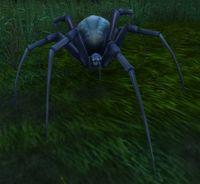 Image of Venom Web Spider