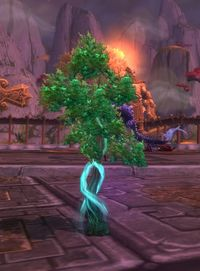 Image of Enchanted Plant