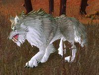Image of Kor'kron Battlewolf