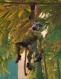 Image of Slingtail Treeleaper