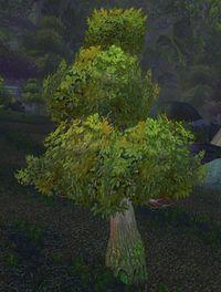Image of Ashenvale Oak