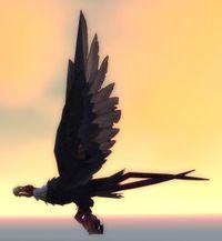 Image of Bloodsail Buzzard