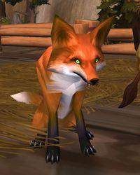 Image of Kora