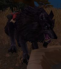 Image of Riding Wolf