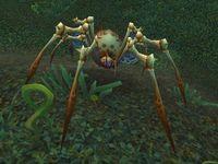 Image of Skitterweb Spiderling