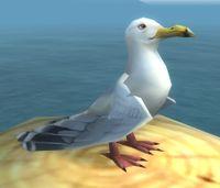 Image of Sea Gull