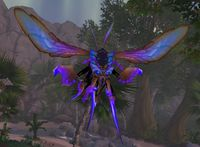 Image of Sapphire Hive Wasp