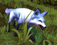 Image of Corsac Fox