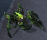 Image of Spiny Tidecrawler