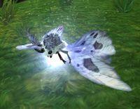 Image of Ashwing Moth