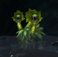 Image of Mandrakor