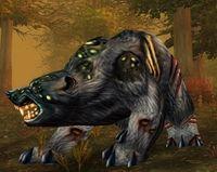 Image of Diseased Black Bear