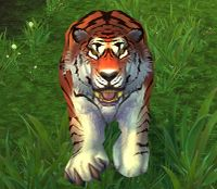 Image of Windward Tiger
