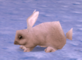 ArcticHare.png