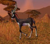 Image of Gazelle