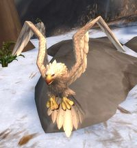 Image of Snowfeather