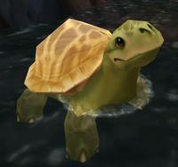 Image of Dalaran Sewer Turtle
