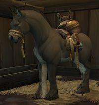 Image of Pack Mule