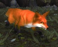 Image of Baradin Fox