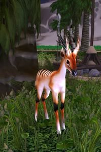 Image of Longstrider Gazelle