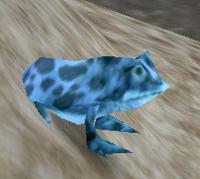 Image of Borean Frog
