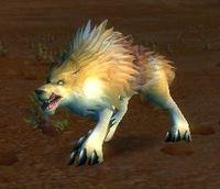 Image of Crag Coyote