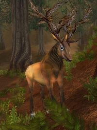 Image of Antlered Courser